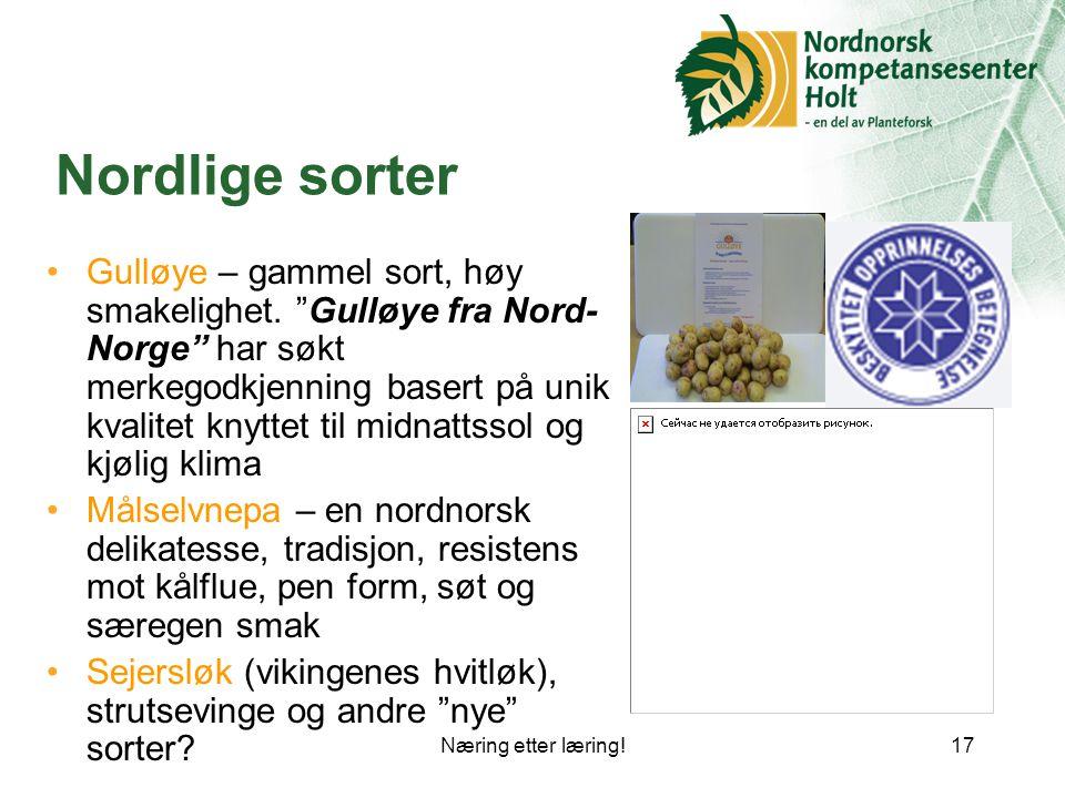 Næring etter læring!17 Nordlige sorter Gulløye – gammel sort, høy smakelighet.