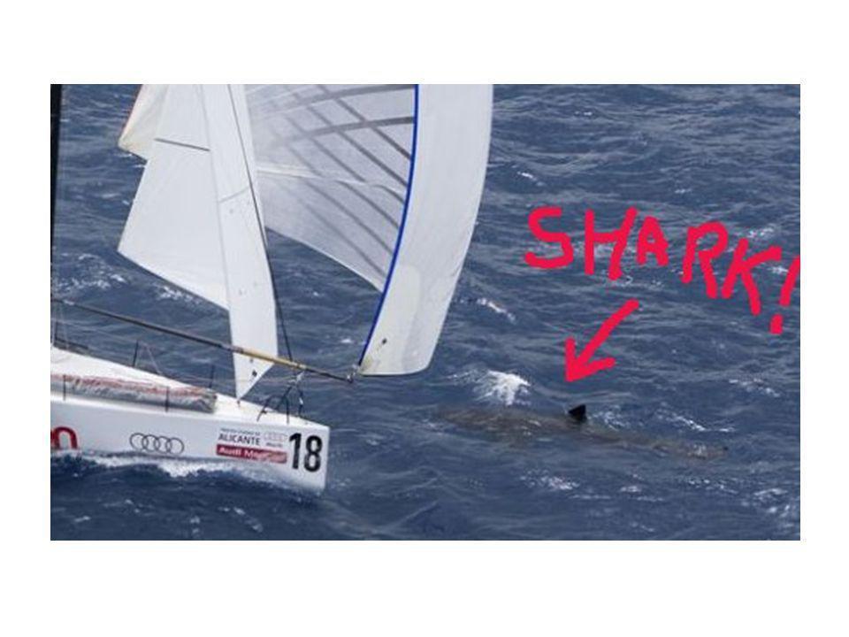 I følge KNS er seiling en grønn idrett. Dette ble bekreftet under OL:
