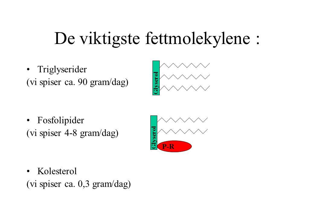 La oss se nærmere på et triglyserid Fettsyrer Molekylet er satt sammen av glyserol og tre fettsyrer.