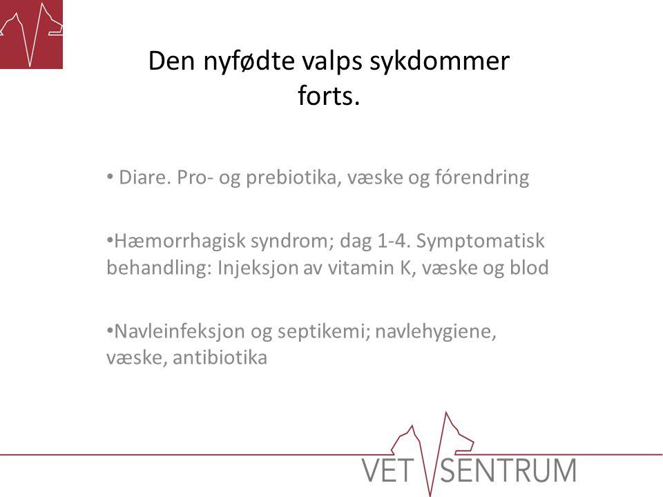 Den nyfødte valps sykdommer forts. Diare. Pro- og prebiotika, væske og fórendring Hæmorrhagisk syndrom; dag 1-4. Symptomatisk behandling: Injeksjon av