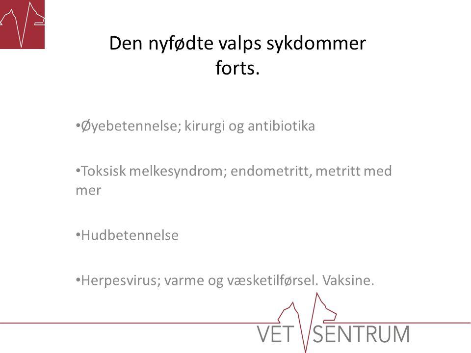Den nyfødte valps sykdommer forts. Øyebetennelse; kirurgi og antibiotika Toksisk melkesyndrom; endometritt, metritt med mer Hudbetennelse Herpesvirus;
