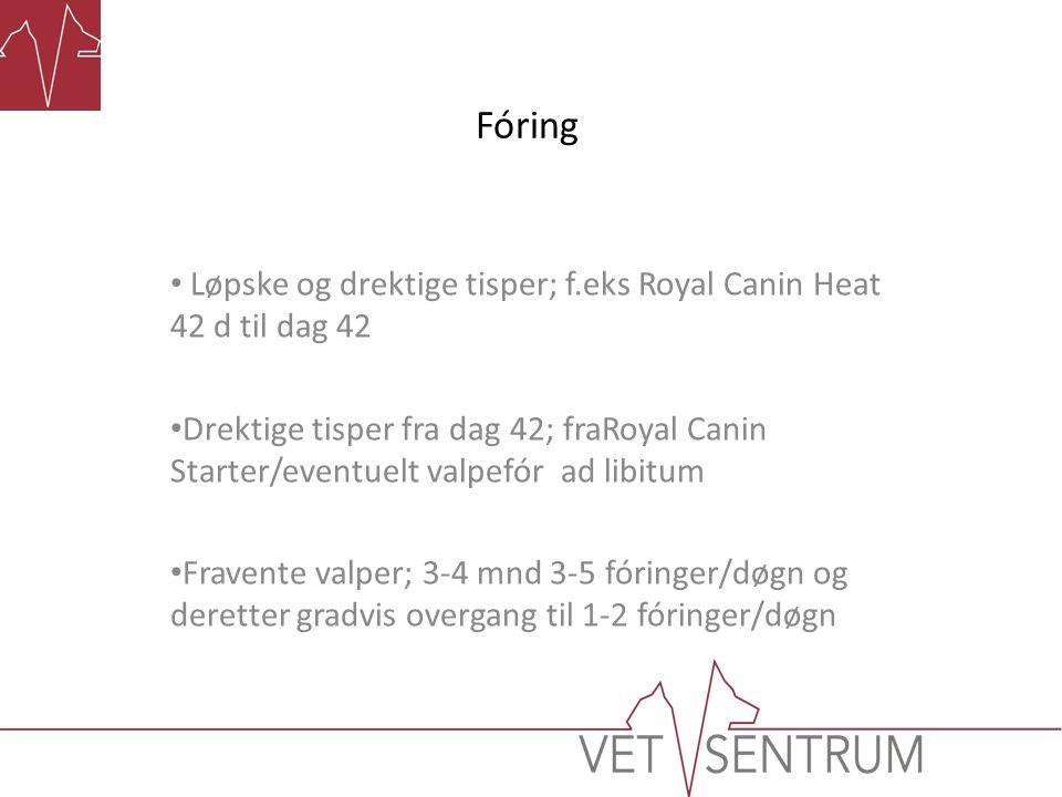 Fóring Løpske og drektige tisper; f.eks Royal Canin Heat 42 d til dag 42 Drektige tisper fra dag 42; fraRoyal Canin Starter/eventuelt valpefór ad libi