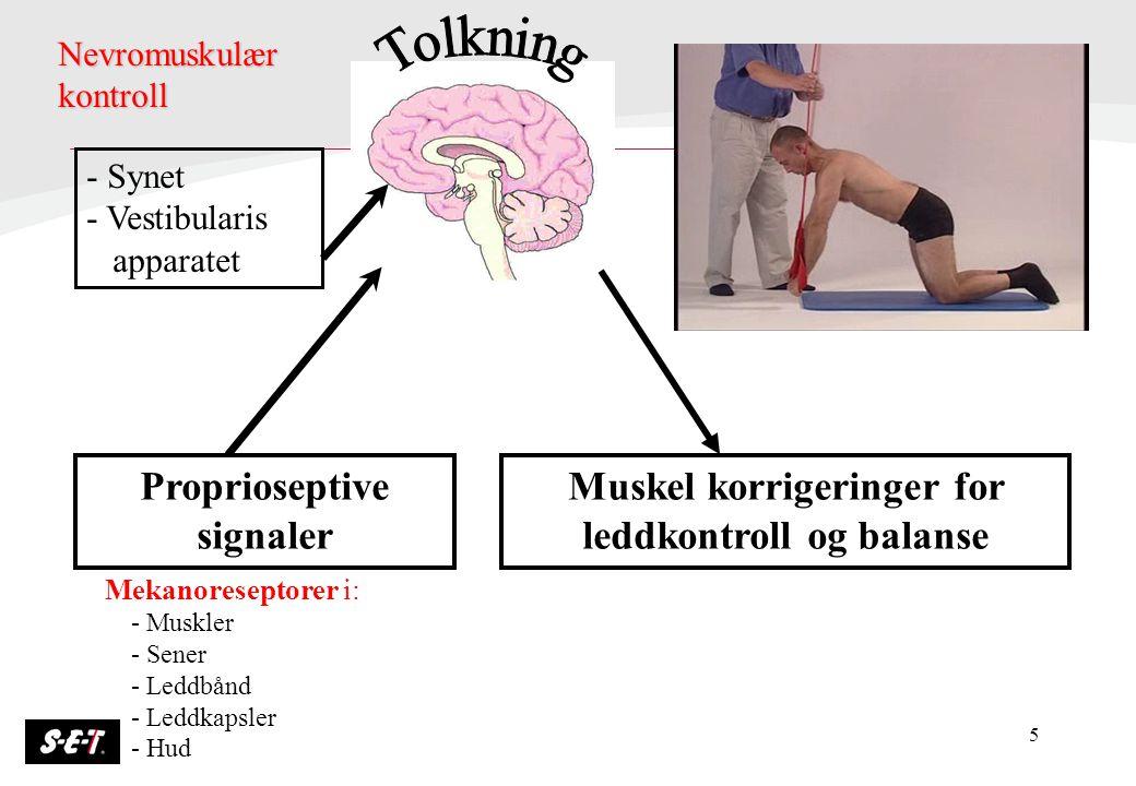 5 Proprioseptive signaler Muskel korrigeringer for leddkontroll og balanse Mekanoreseptorer i: - Muskler - Sener - Leddbånd - Leddkapsler - Hud Nevrom