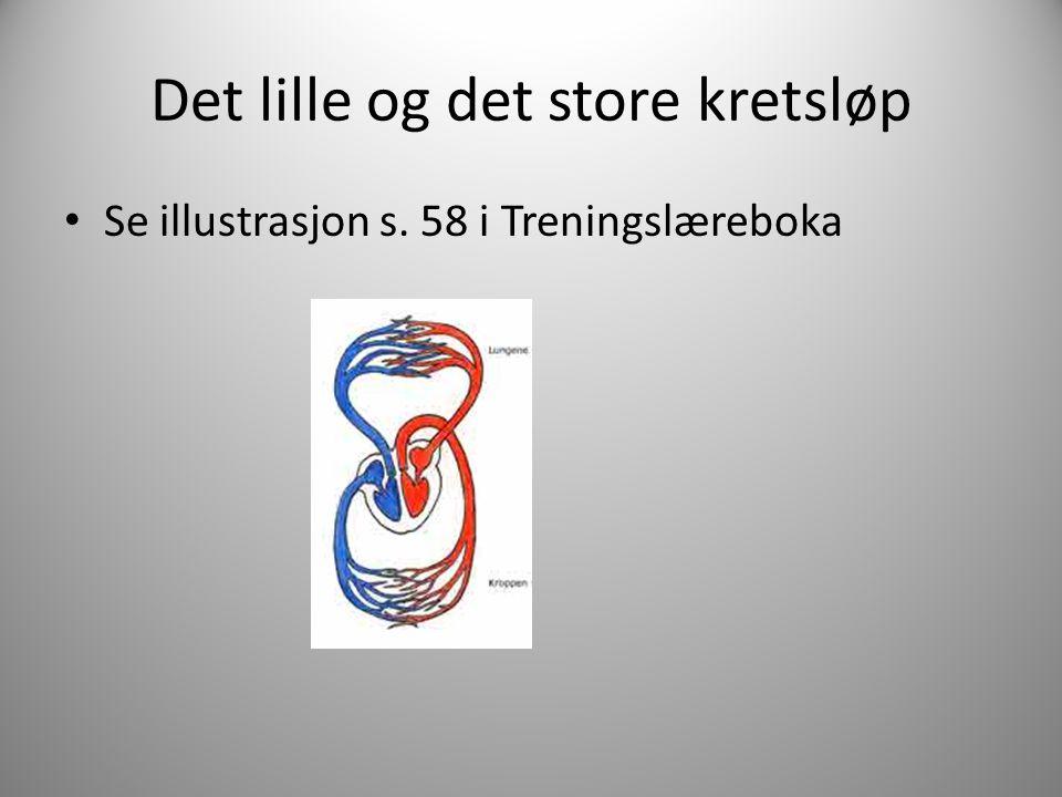 Det lille og det store kretsløp Se illustrasjon s. 58 i Treningslæreboka