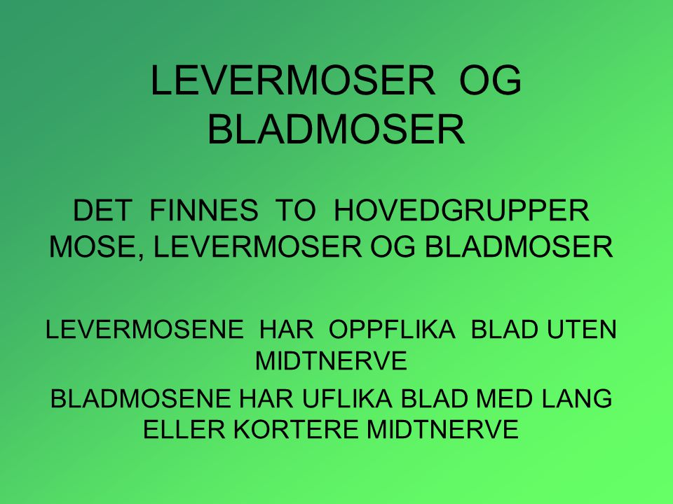 LEVERMOSER OG BLADMOSER DET FINNES TO HOVEDGRUPPER MOSE, LEVERMOSER OG BLADMOSER LEVERMOSENE HAR OPPFLIKA BLAD UTEN MIDTNERVE BLADMOSENE HAR UFLIKA BL
