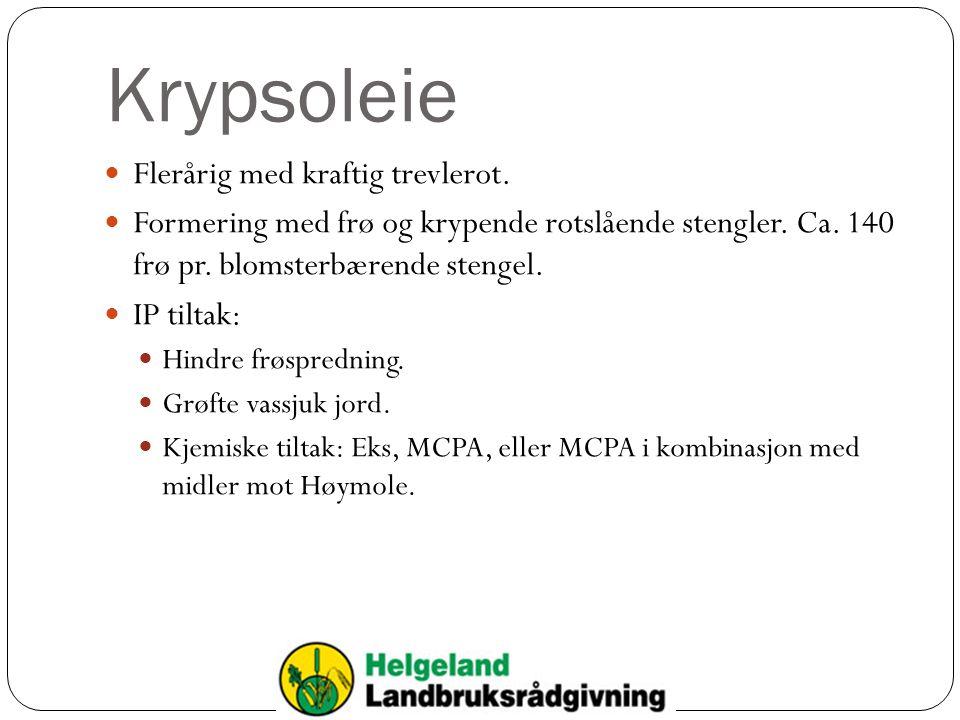 Krypsoleie Flerårig med kraftig trevlerot. Formering med frø og krypende rotslående stengler. Ca. 140 frø pr. blomsterbærende stengel. IP tiltak: Hind