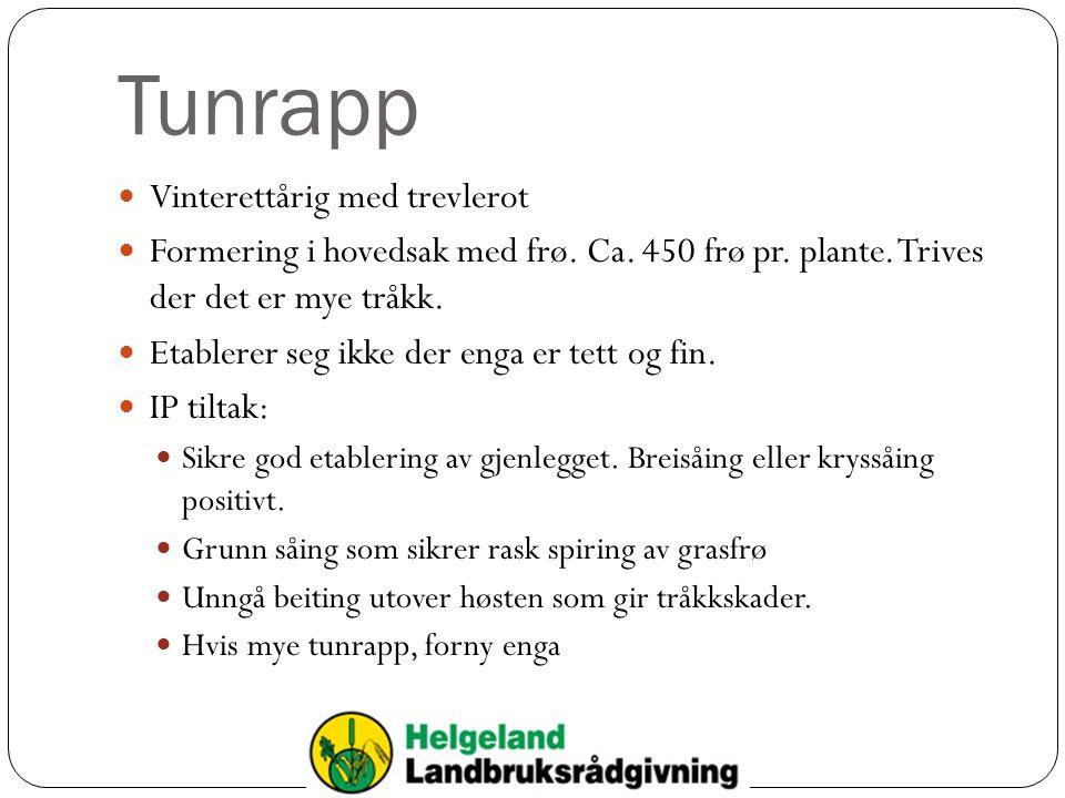 Tunrapp Vinterettårig med trevlerot Formering i hovedsak med frø.