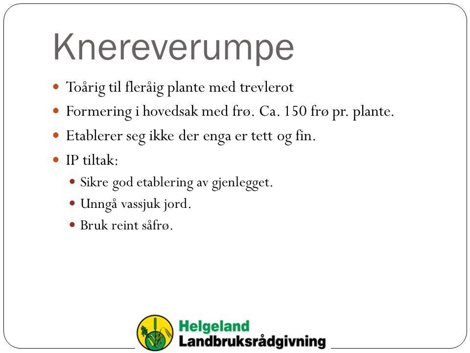 Knereverumpe Toårig til fleråig plante med trevlerot Formering i hovedsak med frø. Ca. 150 frø pr. plante. Etablerer seg ikke der enga er tett og fin.