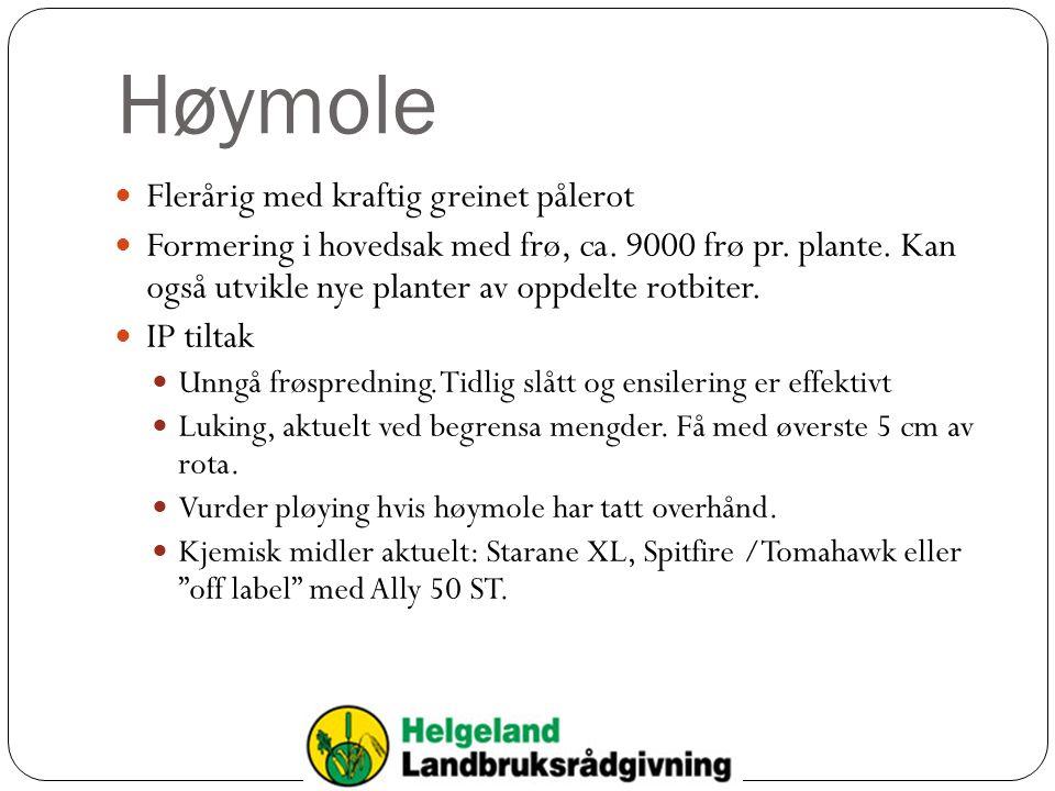 Høymole Flerårig med kraftig greinet pålerot Formering i hovedsak med frø, ca. 9000 frø pr. plante. Kan også utvikle nye planter av oppdelte rotbiter.
