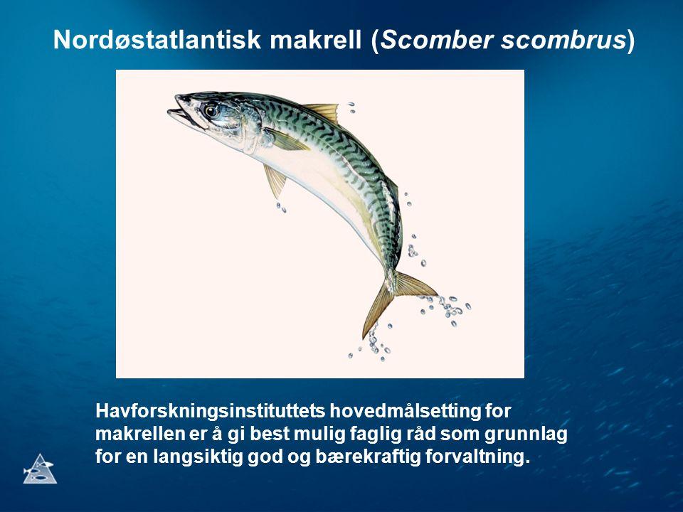 Nordøstatlantisk makrell (Scomber scombrus) Havforskningsinstituttets hovedmålsetting for makrellen er å gi best mulig faglig råd som grunnlag for en