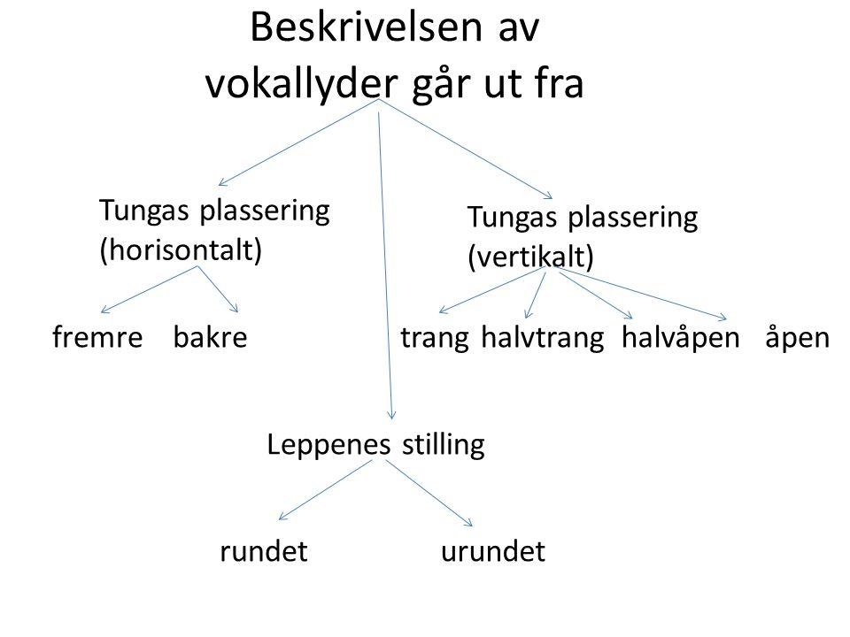 Vokalfirkanten Vokalfirkanten er et system for å beskrive vokalene ut fra tungas høyeste punkt ved uttalen.