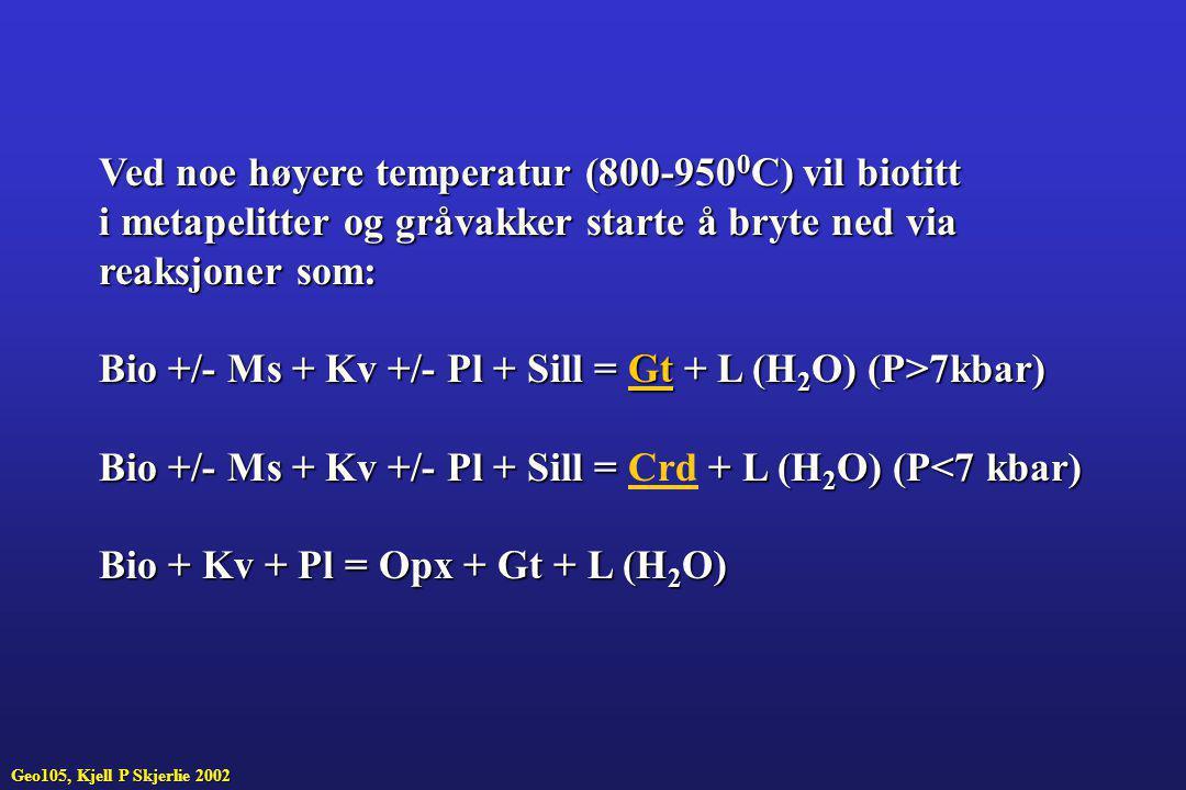 Ved noe høyere temperatur (800-950 0 C) vil biotitt i metapelitter og gråvakker starte å bryte ned via reaksjoner som: Bio +/- Ms + Kv +/- Pl + Sill =