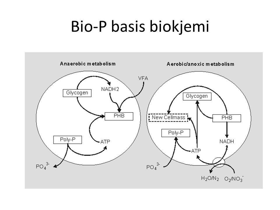 Bio-P basis biokjemi