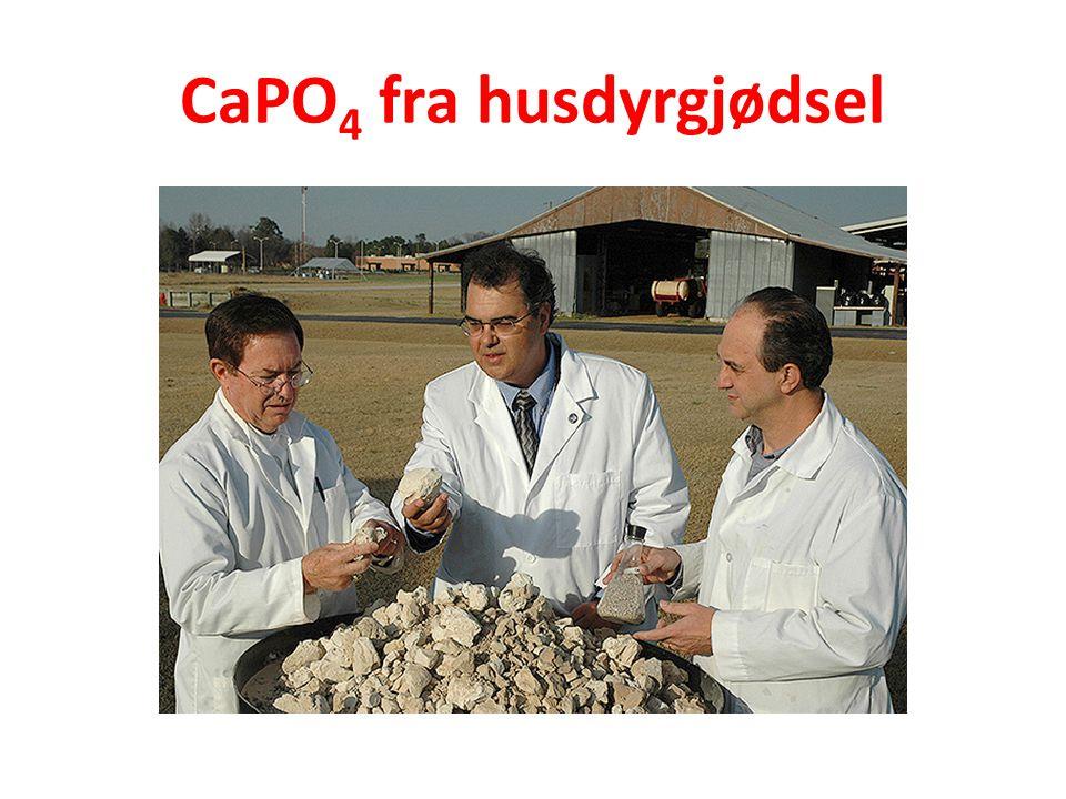 CaPO 4 fra husdyrgjødsel
