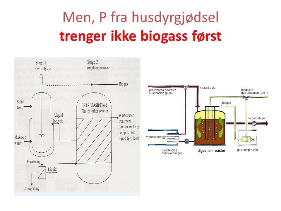 Men, P fra husdyrgjødsel trenger ikke biogass først