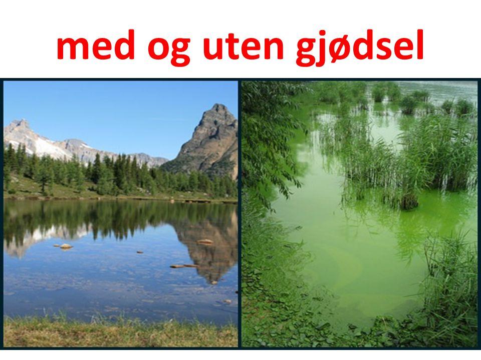 Fosforfangst i kloakk (4) Biologisk fiksering 5 mg/L P i råvann C = 150 mg/L Tilsatte mikroorganismer + HEIMELAGA FETTSYRER resulterer i ekstra P opptak Biologisk slam har all C og P Vann med 0,1 mg/L P i utslipp