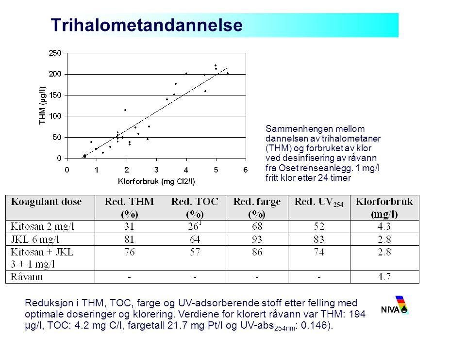 Trihalometandannelse Sammenhengen mellom dannelsen av trihalometaner (THM) og forbruket av klor ved desinfisering av råvann fra Oset renseanlegg. 1 mg