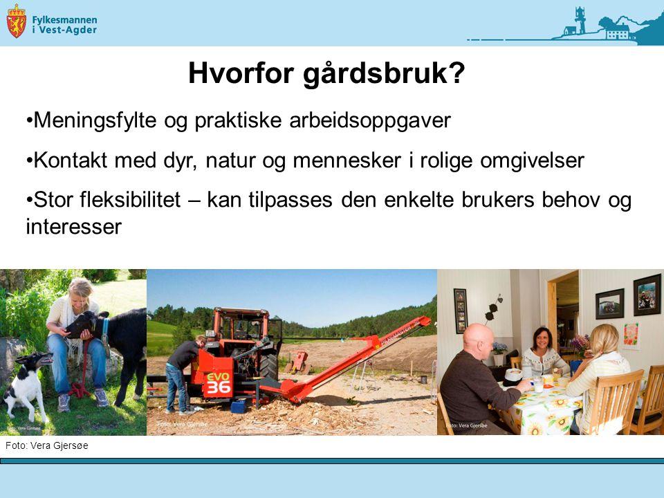 Målsettingen med tilbudet: - mestring, utvikling og trivsel for den enkelte bruker Foto: Vera Gjersøe