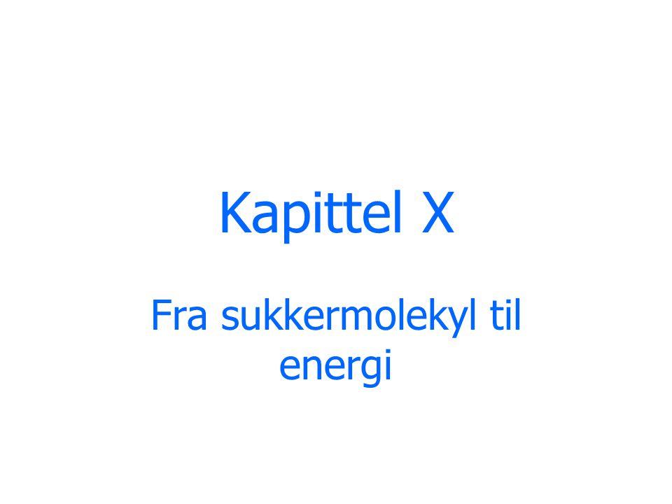 Kapittel X Fra sukkermolekyl til energi