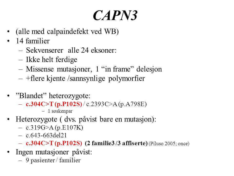 """CAPN3 (alle med calpaindefekt ved WB) 14 familier –Sekvenserer alle 24 eksoner: –Ikke helt ferdige –Missense mutasjoner, 1 """"in frame"""" delesjon –+flere"""