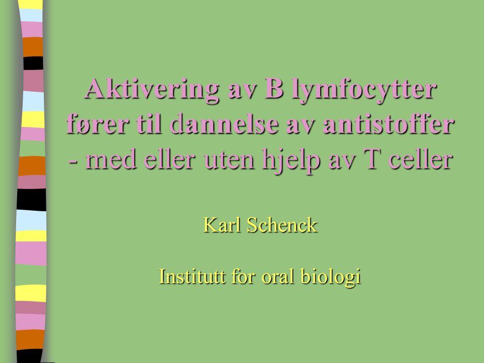 Aktivering av B lymfocytter fører til dannelse av antistoffer - med eller uten hjelp av T celler Karl Schenck Institutt for oral biologi