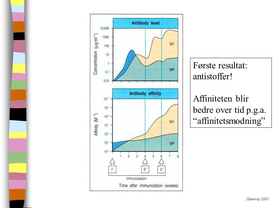 Janeway 2001 Første resultat: antistoffer.Affiniteten blir bedre over tid p.g.a.