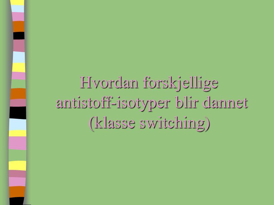 Hvordan forskjellige antistoff-isotyper blir dannet (klasse switching)