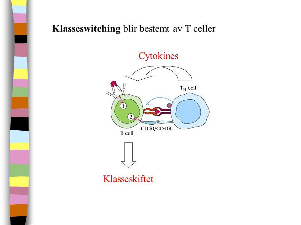 Klasseswitching blir bestemt av T celler Cytokines Klasseskiftet