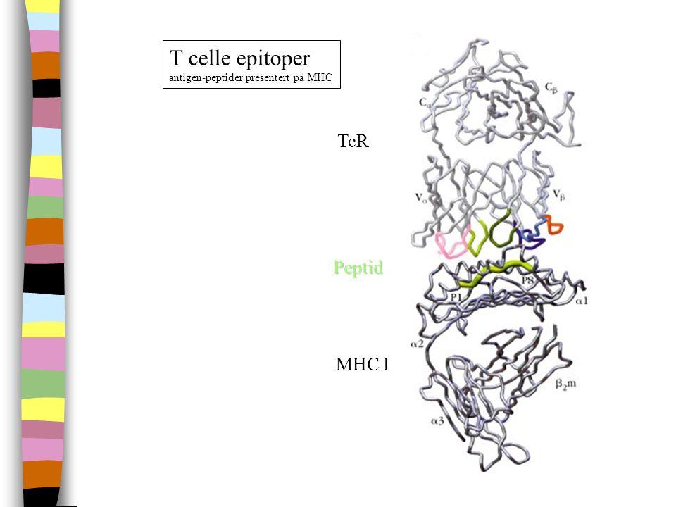 T celle epitoper antigen-peptider presentert på MHC TcR Peptid MHC I