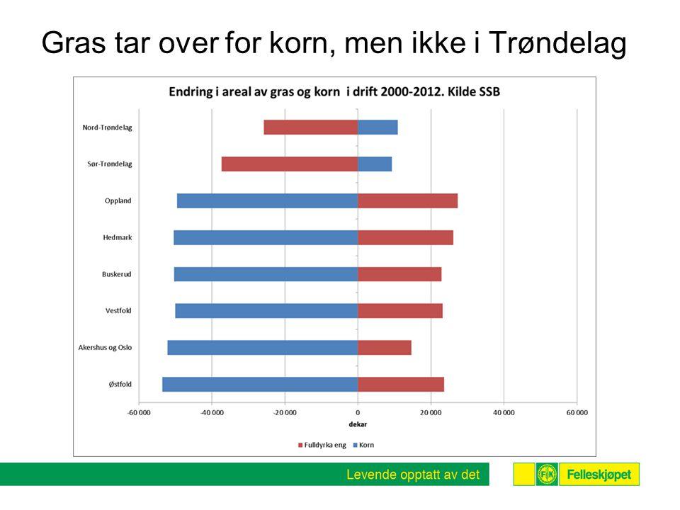 Gras tar over for korn, men ikke i Trøndelag