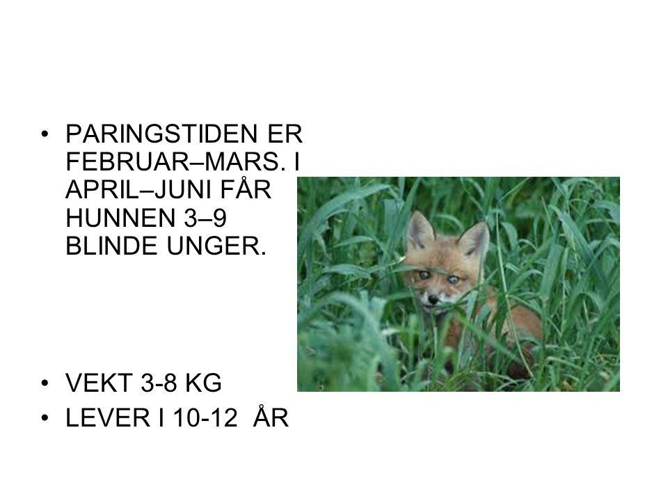 PARINGSTIDEN ER FEBRUAR–MARS. I APRIL–JUNI FÅR HUNNEN 3–9 BLINDE UNGER. VEKT 3-8 KG LEVER I 10-12 ÅR