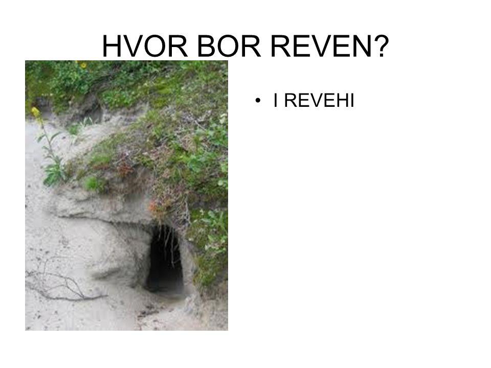 HVOR BOR REVEN? I REVEHI