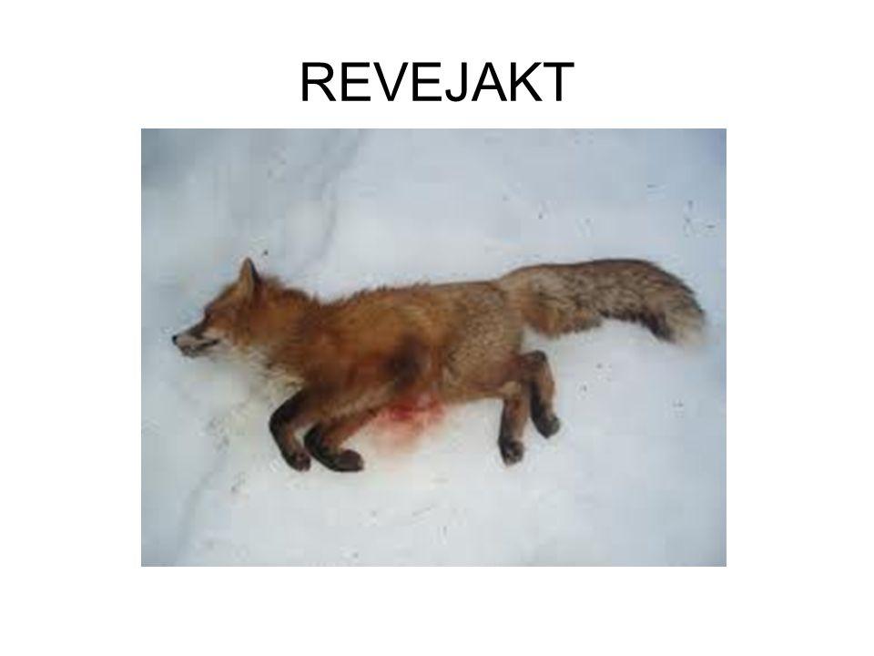 REVEJAKT