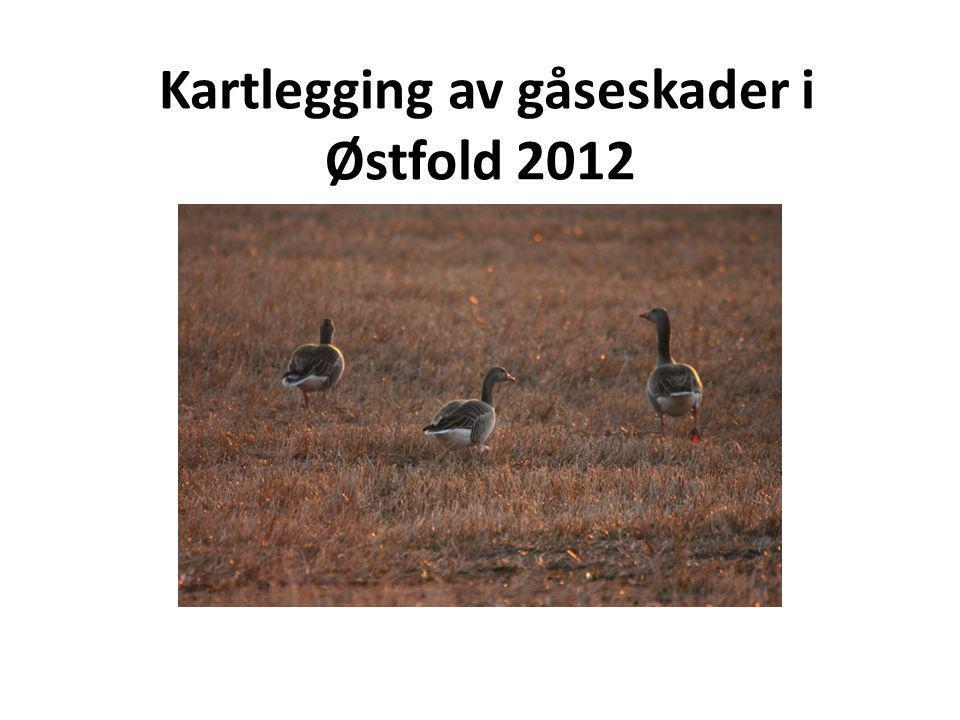 Kartlegging av gåseskader i Østfold 2012