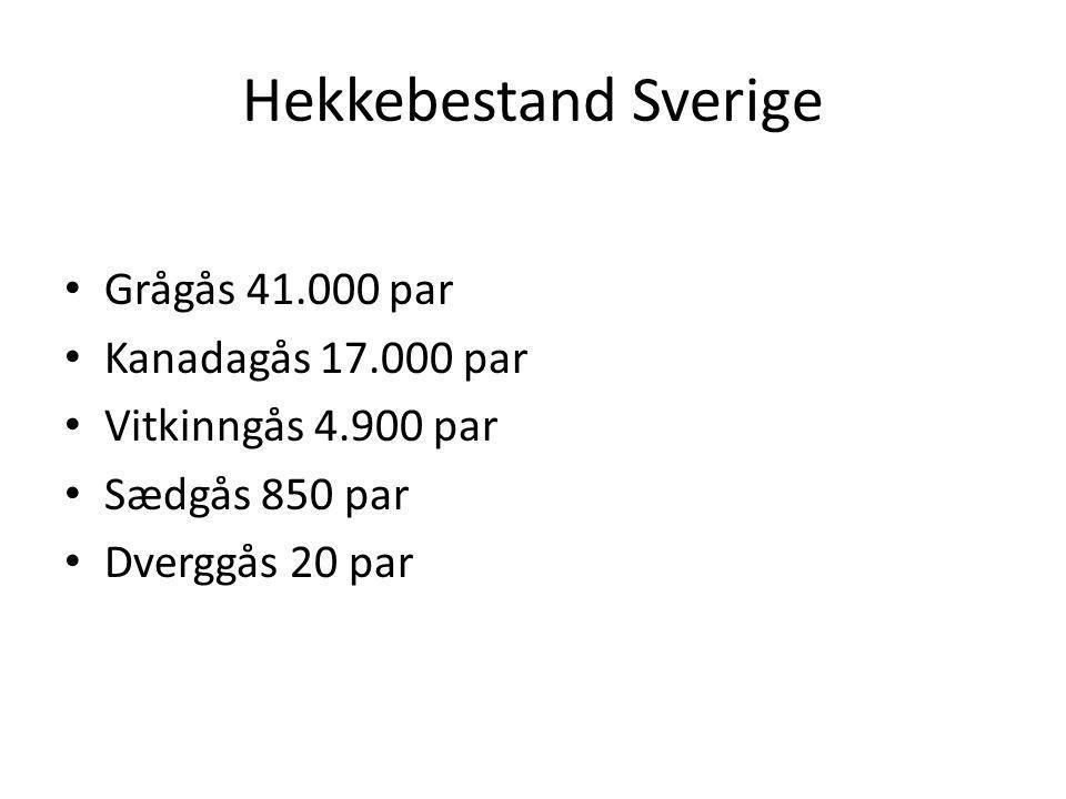 Hekkebestand Sverige Grågås 41.000 par Kanadagås 17.000 par Vitkinngås 4.900 par Sædgås 850 par Dverggås 20 par