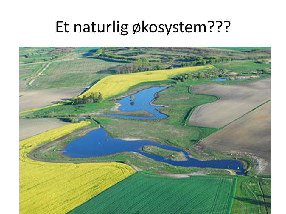 Et naturlig økosystem???