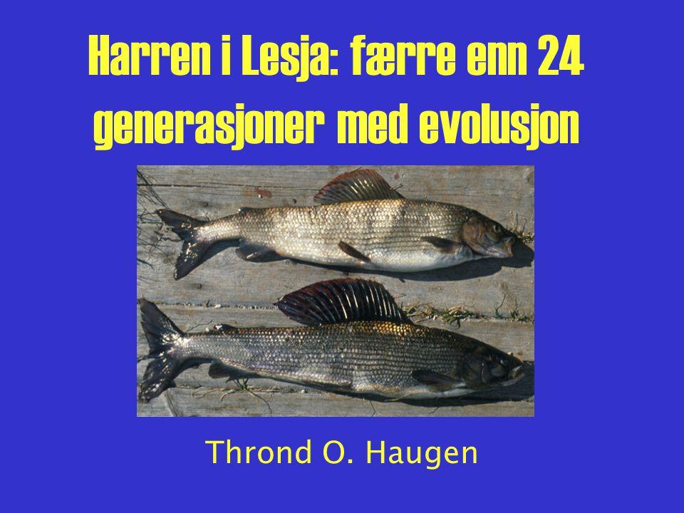 Livshistorieevolusjon Problemstillinger: –Har populasjonene i de fem vatna ulike livshistorier.