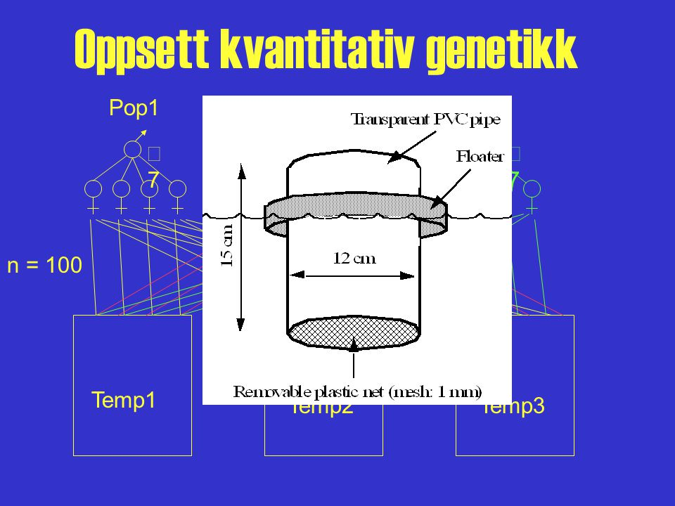 Oppsett kvantitativ genetikk 77 Pop1 77 77 Pop2 Temp1 Temp3Temp2 n = 100