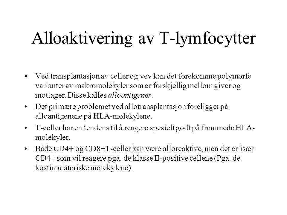 Alloaktivering av T-lymfocytter Ved transplantasjon av celler og vev kan det forekomme polymorfe varianter av makromolekyler som er forskjellig mellom