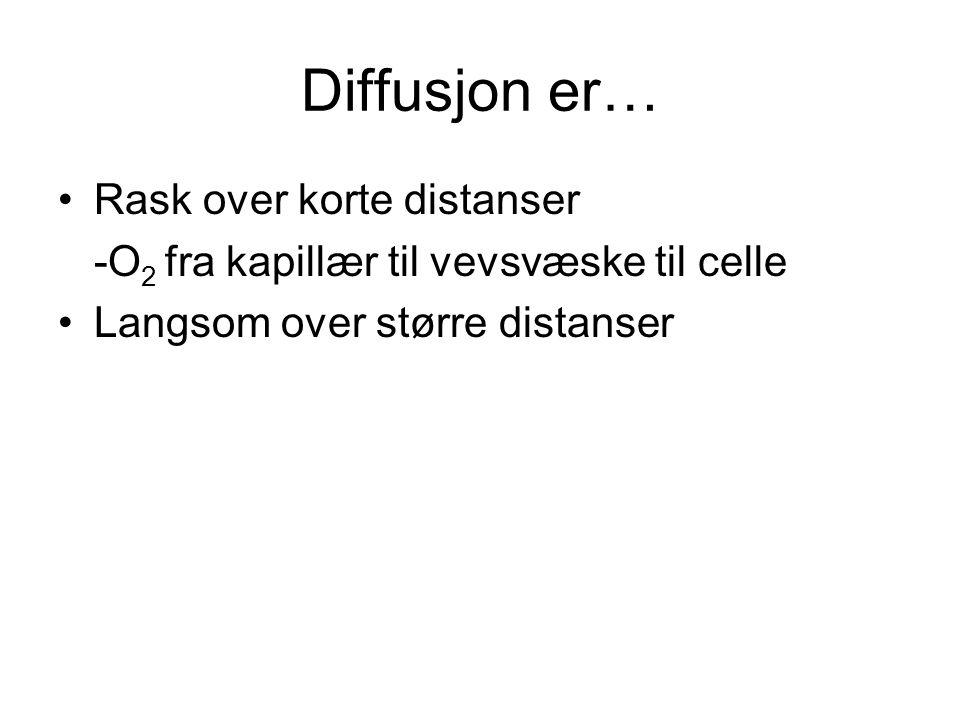 Diffusjon er… Rask over korte distanser -O 2 fra kapillær til vevsvæske til celle Langsom over større distanser