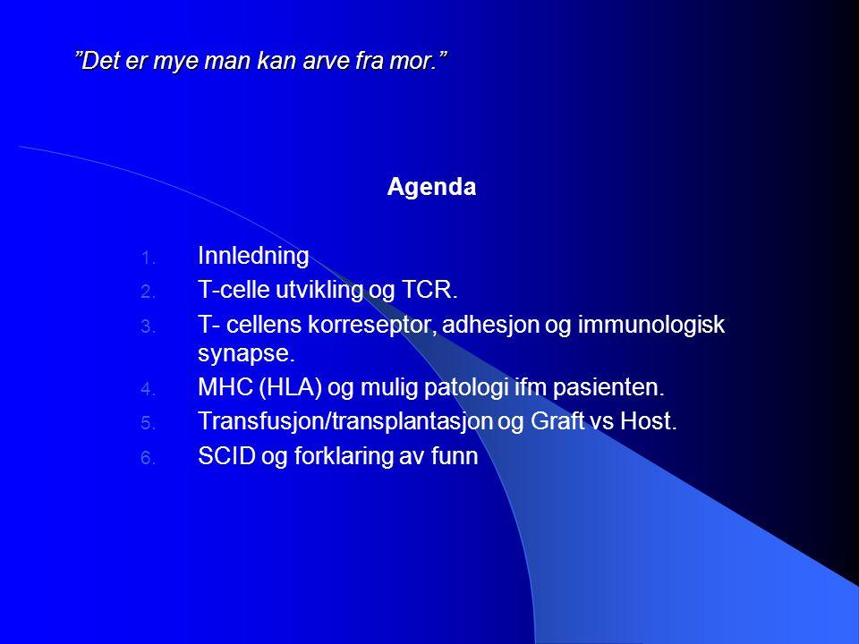 """""""Det er mye man kan arve fra mor."""" Agenda 1. Innledning 2. T-celle utvikling og TCR. 3. T- cellens korreseptor, adhesjon og immunologisk synapse. 4. M"""