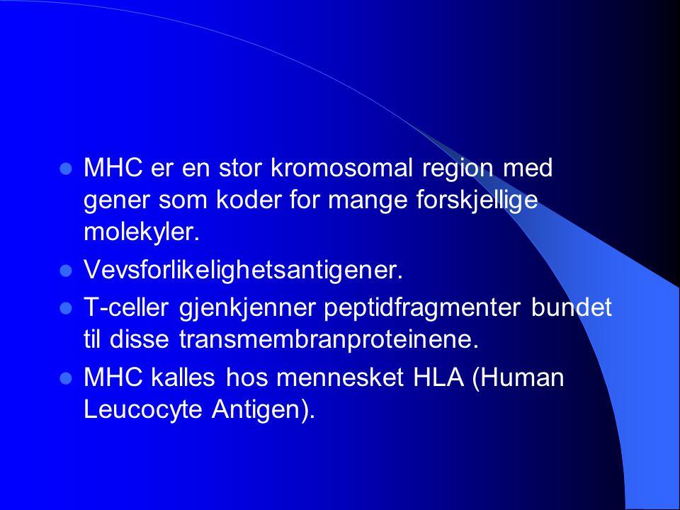 MHC er en stor kromosomal region med gener som koder for mange forskjellige molekyler. Vevsforlikelighetsantigener. T-celler gjenkjenner peptidfragmen