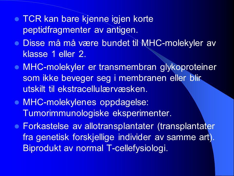 TCR kan bare kjenne igjen korte peptidfragmenter av antigen. Disse må må være bundet til MHC-molekyler av klasse 1 eller 2. MHC-molekyler er transmemb