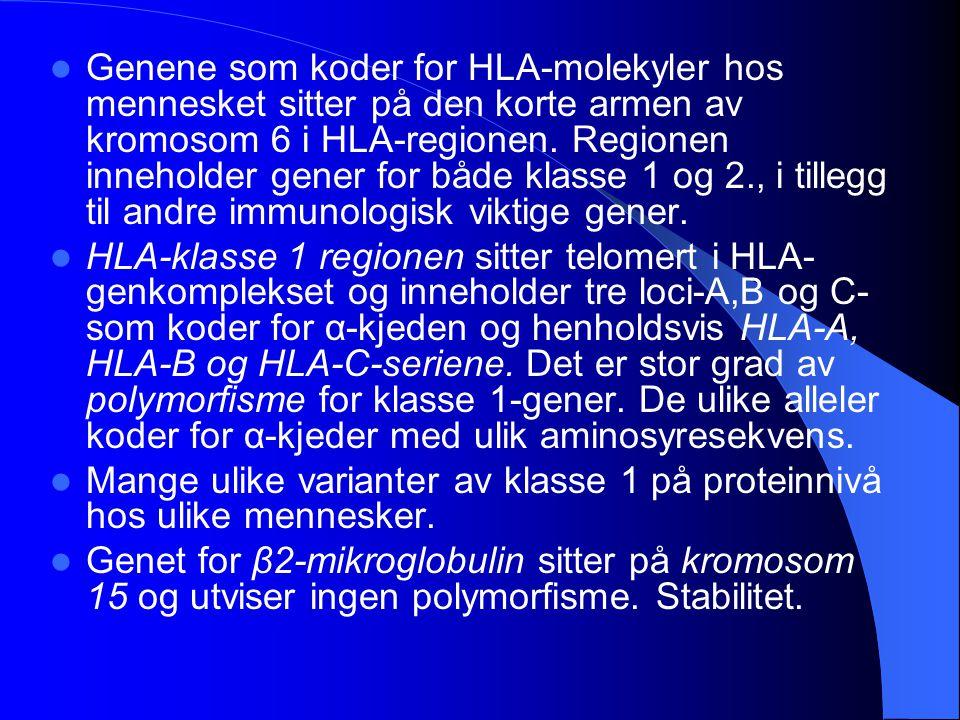 Genene som koder for HLA-molekyler hos mennesket sitter på den korte armen av kromosom 6 i HLA-regionen. Regionen inneholder gener for både klasse 1 o
