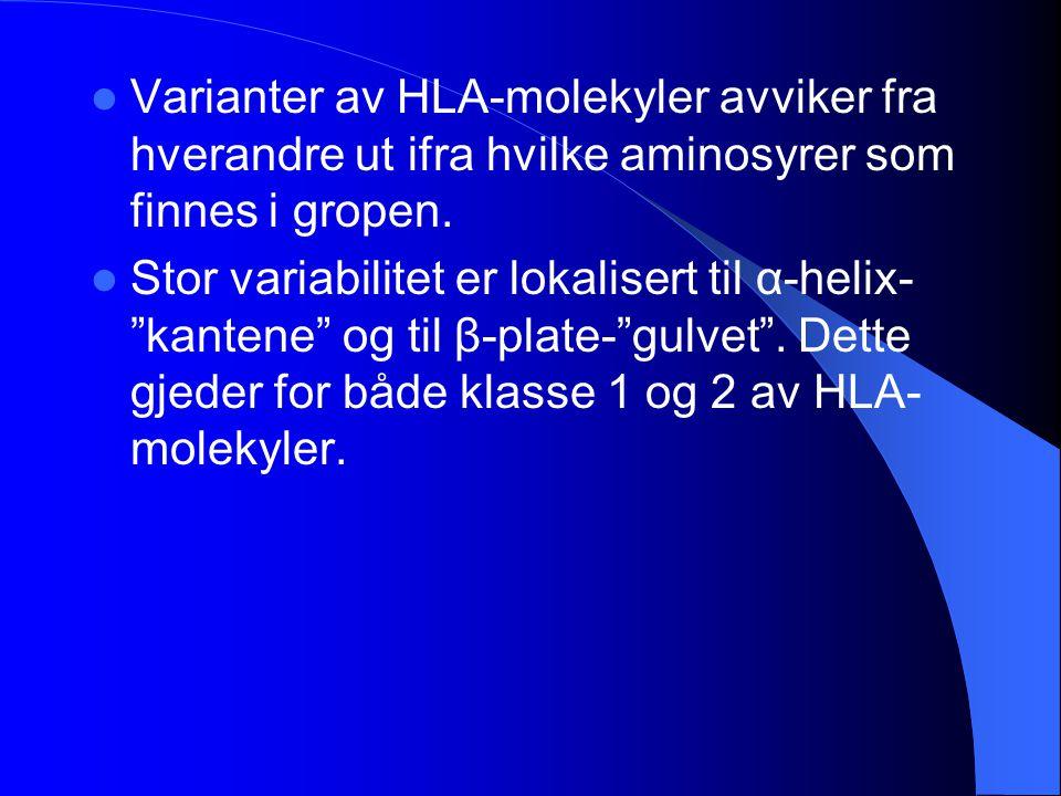 """Varianter av HLA-molekyler avviker fra hverandre ut ifra hvilke aminosyrer som finnes i gropen. Stor variabilitet er lokalisert til α-helix- """"kantene"""""""