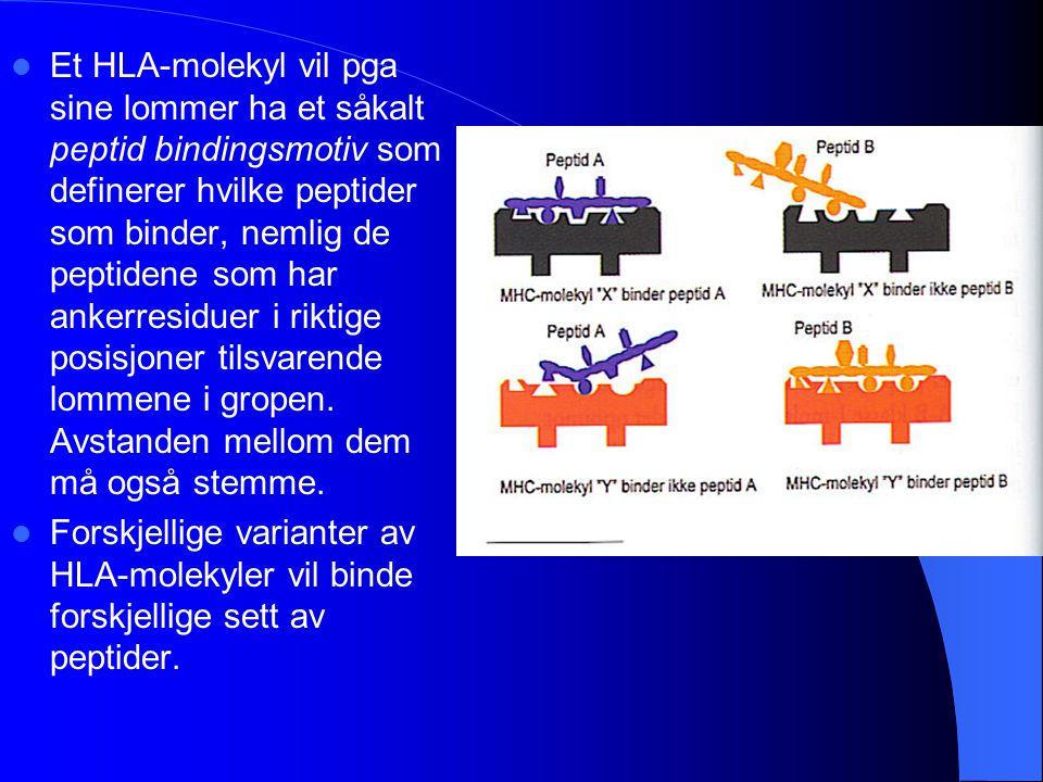 Et HLA-molekyl vil pga sine lommer ha et såkalt peptid bindingsmotiv som definerer hvilke peptider som binder, nemlig de peptidene som har ankerresidu