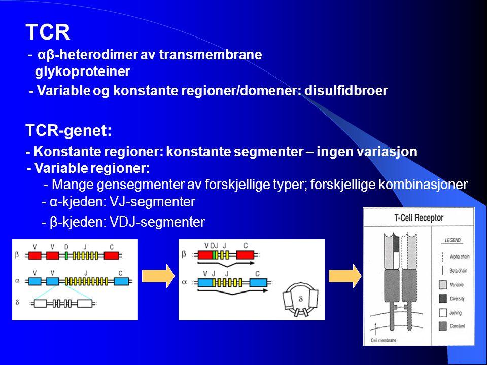 TCR - αβ-heterodimer av transmembrane glykoproteiner TCR-genet: - α-kjeden: VJ-segmenter - β-kjeden: VDJ-segmenter - Variable regioner: - Konstante re