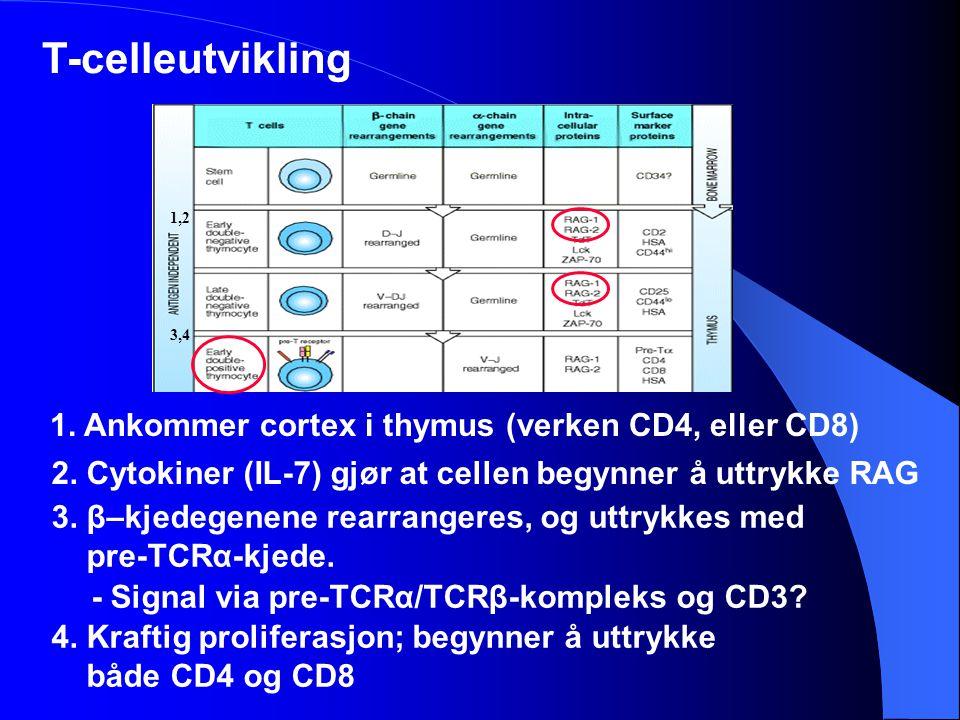 T-celleutvikling - Signal via pre-TCRα/TCRβ-kompleks og CD3? 1. Ankommer cortex i thymus (verken CD4, eller CD8) 1,2 3. β–kjedegenene rearrangeres, og