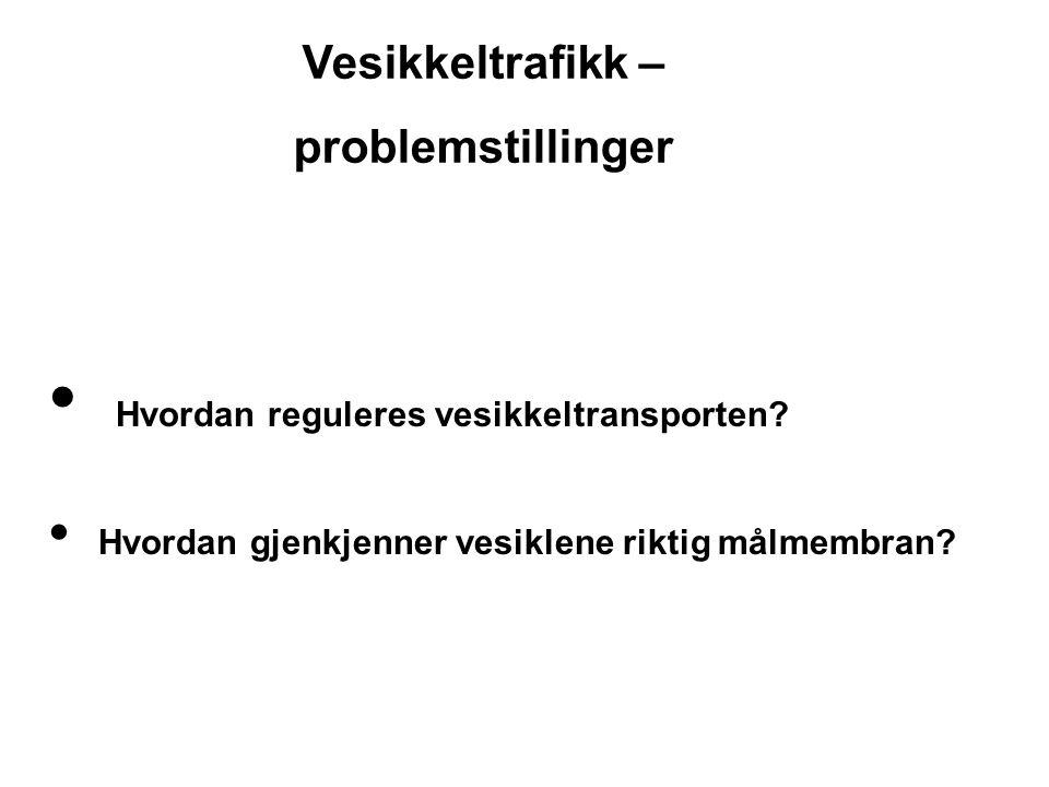 Hvordan reguleres vesikkeltransporten? Hvordan gjenkjenner vesiklene riktig målmembran? Vesikkeltrafikk – problemstillinger