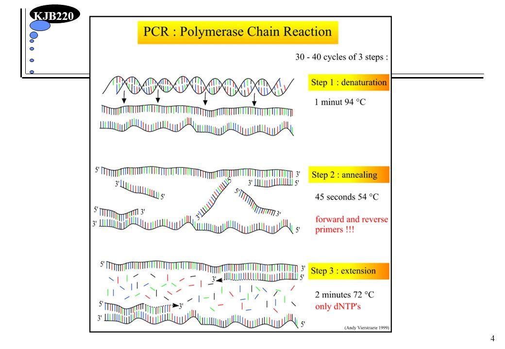 KJB220 15 Valg av PCR-syklus Denaturering temp.